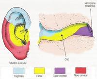 Inervación conducto auditivo externo